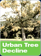 Urban Tree Decline